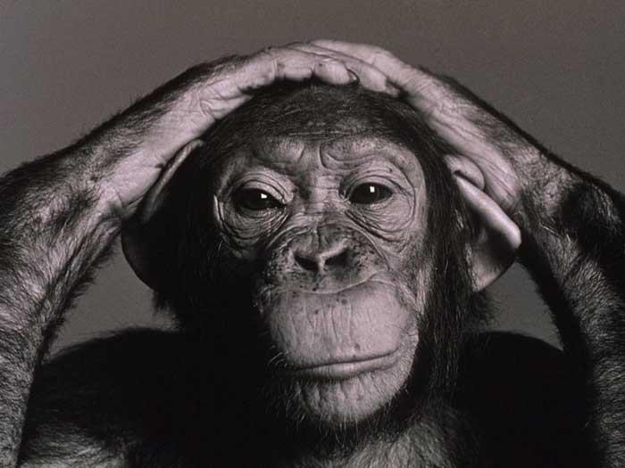 http://www.primates.com/chimps/chimp.jpg